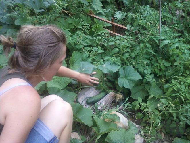 Discovering zucchini