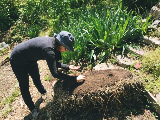 Strawbale planting