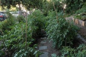 Lush tomato beds