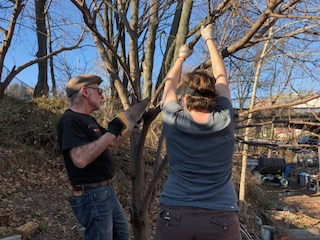 Tom A and Jo pruning