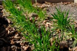 Mystery grass