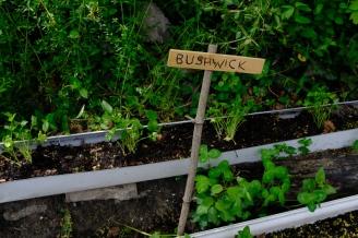 Bushwick herb gutters