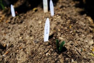 Squash sprouts